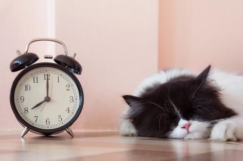 時計と寝ている猫
