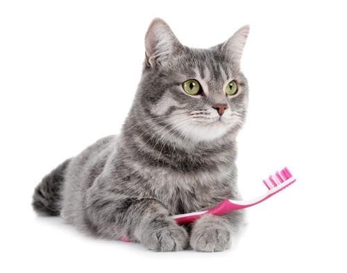 歯ブラシと猫
