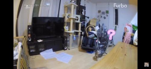 机の上を見つめる猫