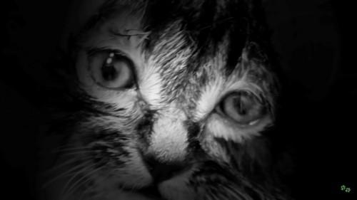 レスキュー後の子猫の顔アップ2