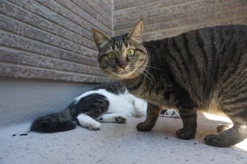 保護した猫