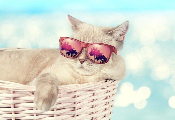 ピンクのサングラスをかける猫