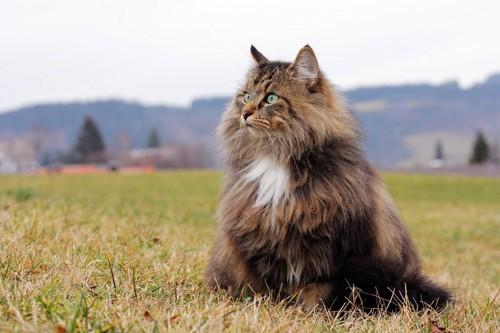 芝の上にいる猫