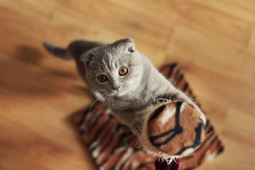 爪とぎと猫