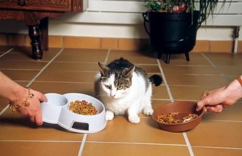 食に迷う猫