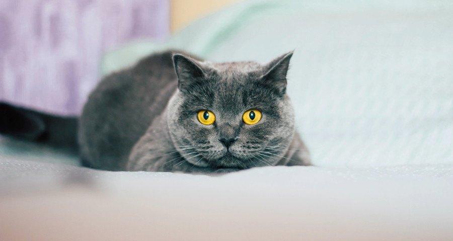 じっとみる猫