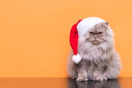 サンタ帽子をかぶった猫