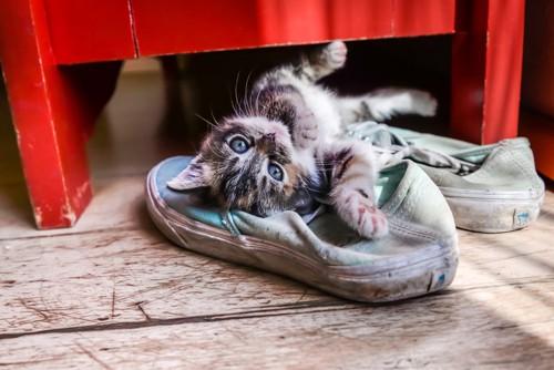 靴の上に寝転んでいる猫