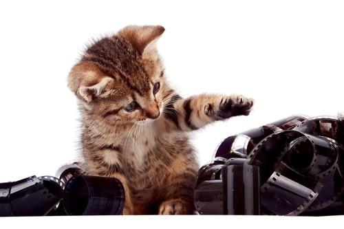 フィルムと猫