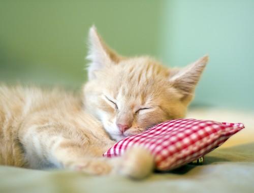 可愛らしい子猫