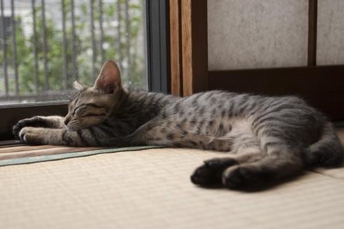 畳の上でのびている猫