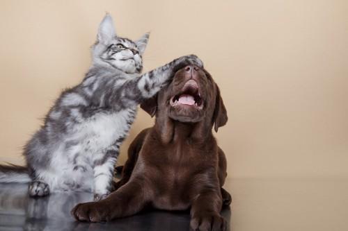 子犬に猫パンチする子猫