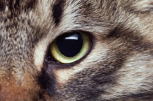 見つめる猫の目アップ