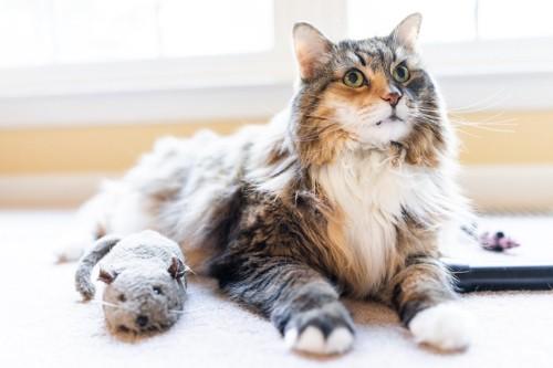 猫とねずみのぬいぐるみ