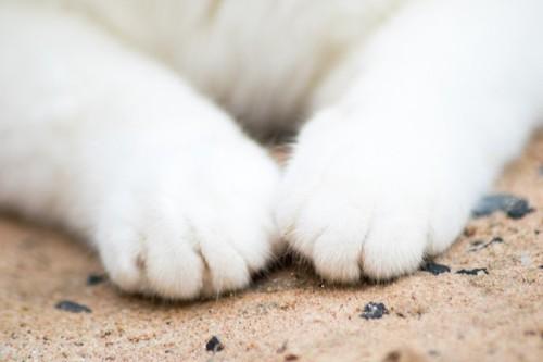 猫の足元アップ
