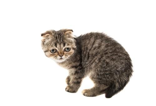 おびえる子猫