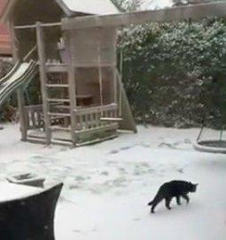 雪に興味津々