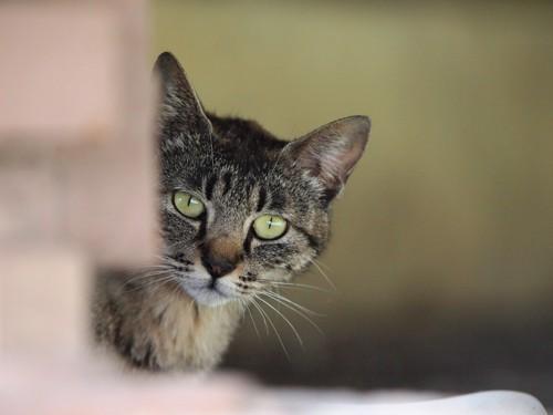 覗く猫の写真