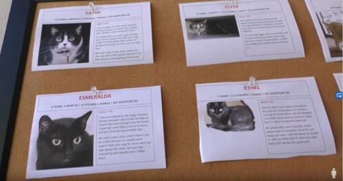 掲示板に貼られた猫の写真