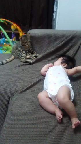 猫と寝てる赤ちゃん