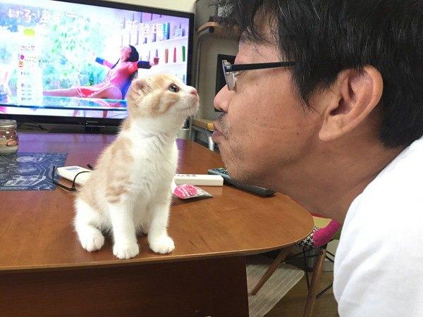 アメリカンカールの子猫に顔を近づける男性