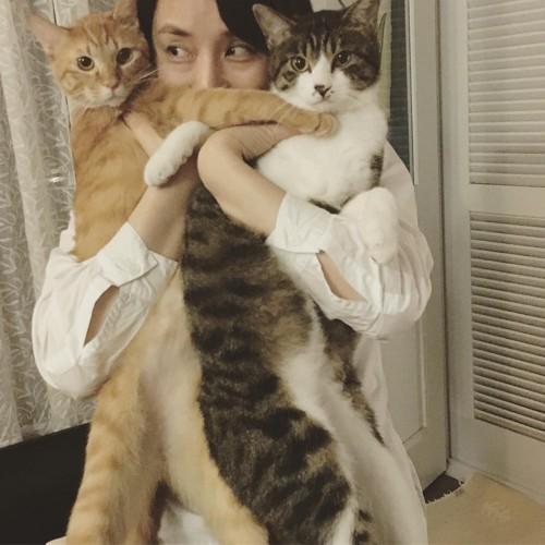 石田ゆり子の猫、はっちとみっつ