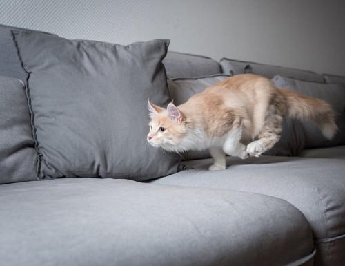 ソファの上を走る猫