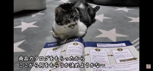 カタログをみる猫