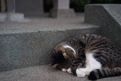 階段の途中で丸まって顔を隠す猫