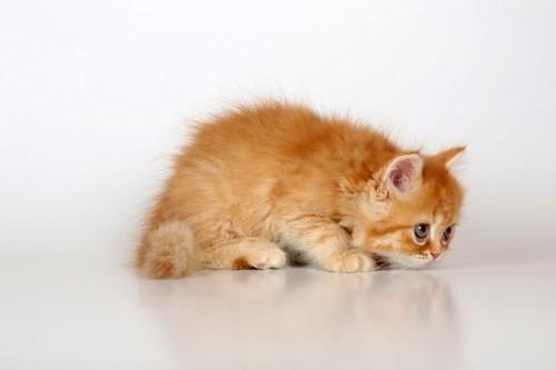 不安そうに歩く子猫