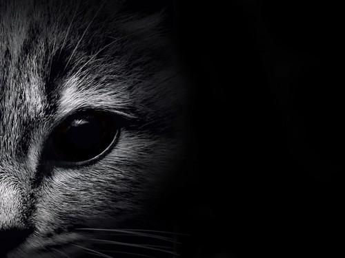 モノクロの猫写真