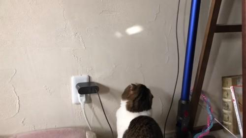 壁の光を見つめる猫
