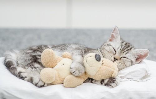 おもちゃを抱いて眠る子猫