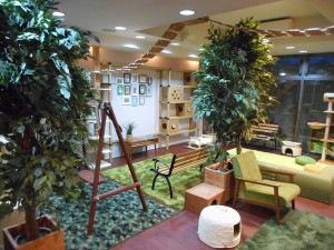 神戸の猫カフェニャーニャの森