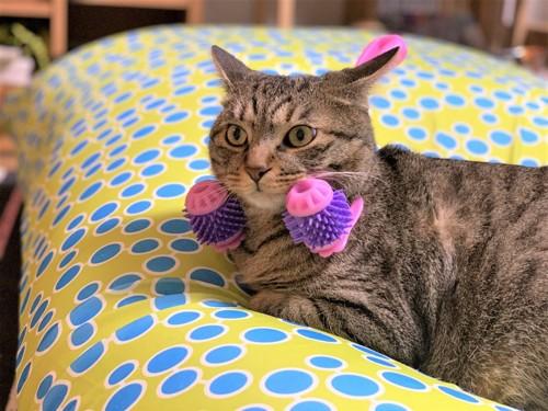 マッサージ機に挟まれる猫