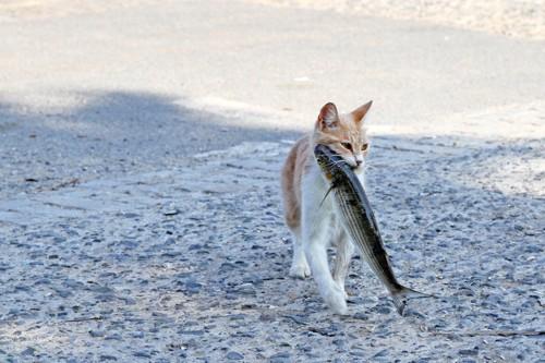 お魚をくわえたドラ猫