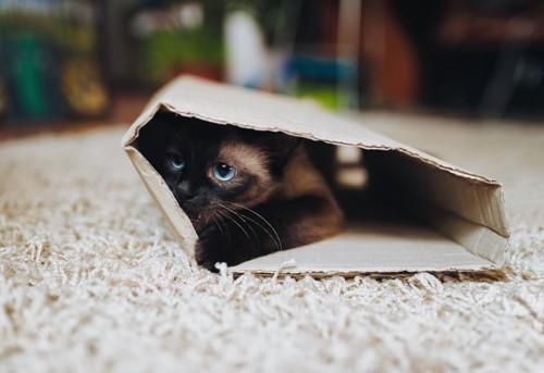 筒の中に隠れる猫
