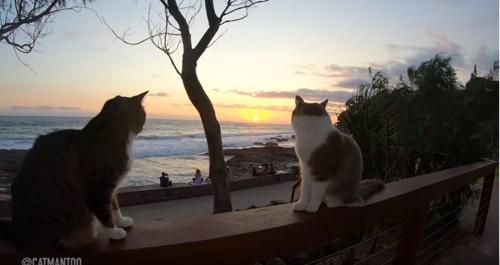 2匹の猫の間から見える日の出