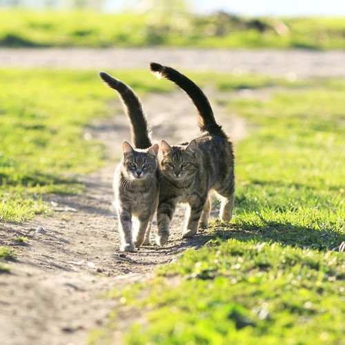 2匹の猫がくっついて歩いている