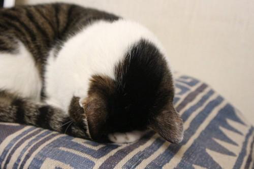 ごめん寝の猫