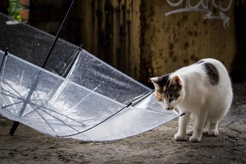 ひっくり返った傘と猫