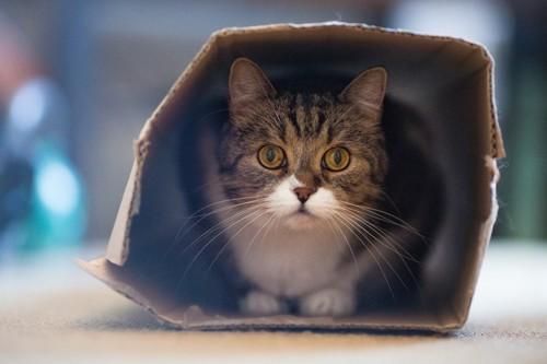 怖がっている猫