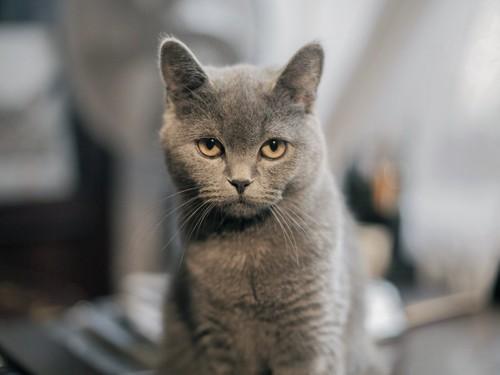 座ってこちらをじっと見つめる猫