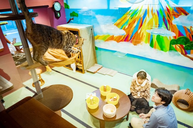 猫と宿泊客