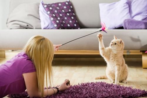 女性がじゃらす棒で遊ぶ猫