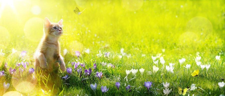 花畑で蝶々を追いかける子猫