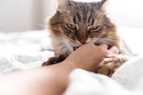 手に噛みつく猫