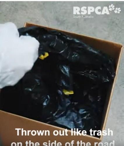 段ボールに入ったゴミ袋