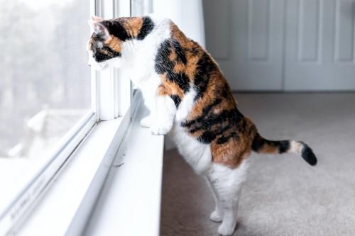 立ち上がって窓の外を見つめる猫