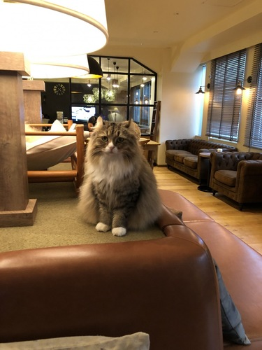 こちらを見て座る猫